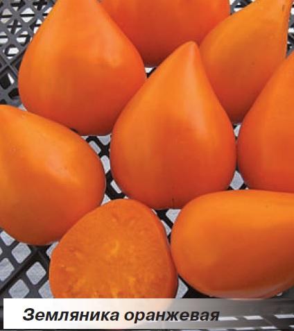 Оранжевая клубника томат фото отзывы