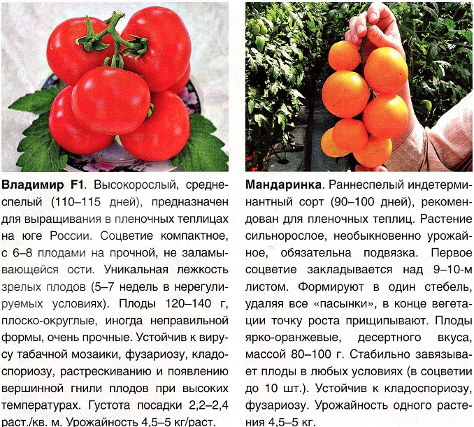 кистевые сорта помидор
